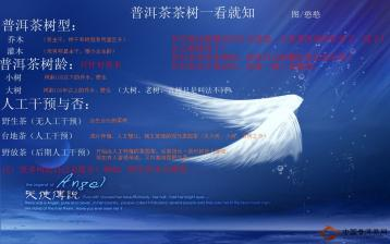 中国普洱茶网教你理清普洱茶树概念